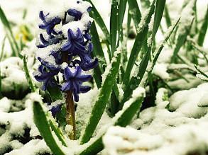 Москву ждет снежный май и заморозки