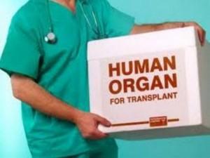 Продажа органов будет караться по всей строгости УК РФ