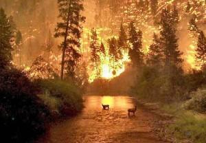 В России горит сибирская тайга