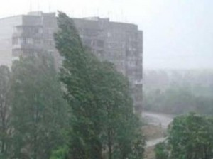 В Москве упавшим деревом убило молодую женщину