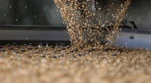 Казахстан увеличит экспорт зерна через Китай