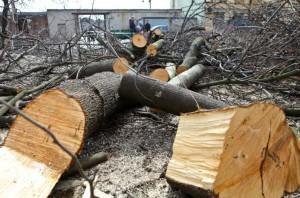 В Петербурге деревья не выдерживают силы ветра