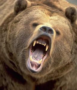 На Камчатке мужчина боролся за свою жену с медведем