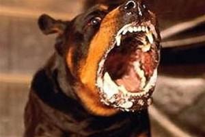 Годовалая девочка госпитализирована после укуса собаки в Самаре