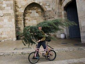 Каждый год в Швеции крадут 600 тысяч рождественских елей