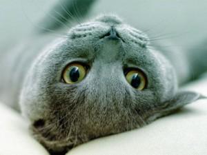 Ученые выяснили, почему кошки не реагируют на зов хозяев
