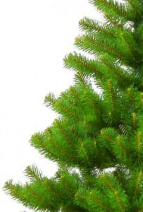 Жители Петербурга определили – какую елку купят для города