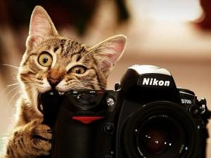 Психологи утверждают, что фотографии не помогают запомнить события и объекты