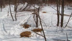Браконьеры убили депутата в Приморье