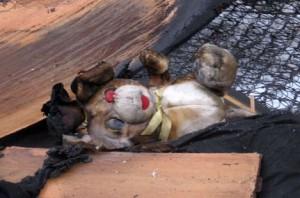 Пожар стал причиной гибели троих мальчиков