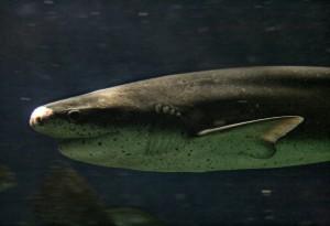 Врачу из Новой Зеландии удалось отбиться от акулы при помощи ножа