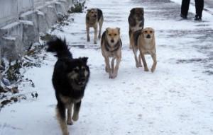 Собаки загрызли 9-летнюю девочку в Якутии