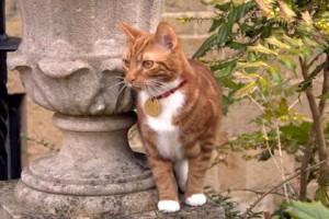 В поместье Уинстона Черчилля поселился новый кот Джок 6-й