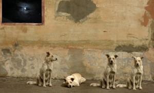 В Сербии пострадавшим собакам ищут хозяев