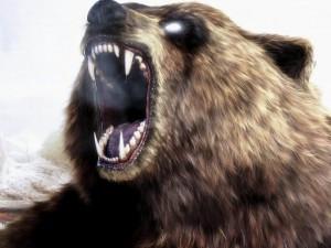 На Камчатке застрелен медведь – людоед, второго пока ищут