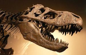 Американские ученые, говорят, что динозавры вымерли, из - за Челябинского метеорита