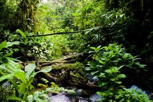 Бразильское племя индейцев впервые вышло на контакт с внешним миром