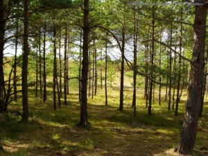 В Новгородской области отменили, введенный запрет на посещение лесов