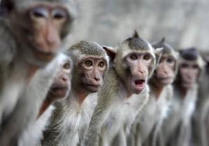 Возле парламента в Дели туристов развлекают люди-обезьяны