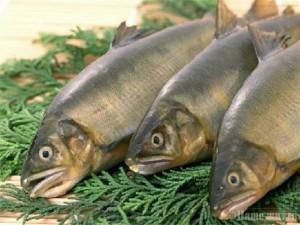 Ученые: чтобы женщинам дольше сохранить хороший слух, нужно употреблять рыбу