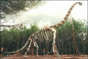 Найдены останки динозавра общим весом со стадо слонов