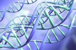 Ученые обнаружили ген, способный продлить жизнь на треть