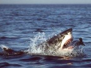 Ученые утверждают, акулы убивают мужчин в девять раз больше, нежели женщин