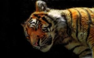 В Кремле поддержали появление на экране маленького тигренка Мура
