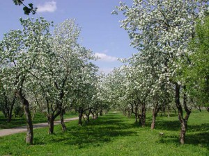 В новгородской области дальше продолжают развивать промышленное садоводство