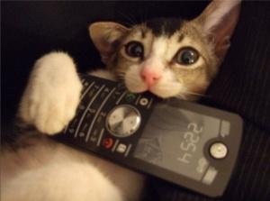 Полиция задержала кошку при попытке пронести телефон в колонию Ухты
