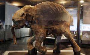 Ученые уверяют, что вскоре на Земле появятся клонированные мамонты