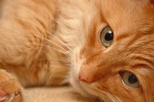 Кошка - гурман из МАВ заведет свои аккаунты в Instagram и Twitter