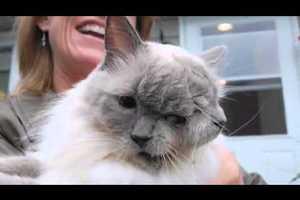 Скончался знаменитый американский кот с двумя мордами
