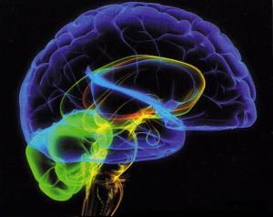 """Ученые нашли в человеческом мозге """"точку совести"""""""