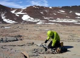 В Антарктиде найдены окаменелые останки древних лесов