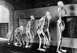 Финские ученые: эволюция человечества продолжается