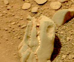 На Марсе обнаружен череп травоядного динозавра