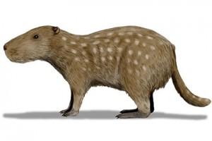 В Южной Америке найдены останки грызуна - гиганта с огромными резцами
