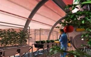 В планах ученых выращивать на марсоходах фрукты и овощи