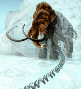 Ученые пересадили слону гены мамонта