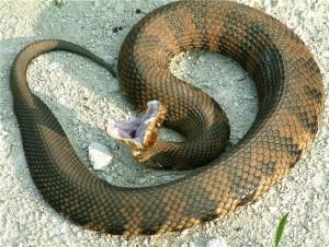 Американского подростка укусила ядовитая змея, когда он попытался ее поцеловать