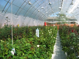 Ненецкий автономный округ обеспечит себя овощами сам