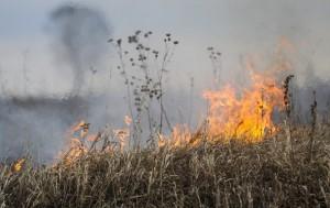 Площадь пожаров в Забайкалье достигла 142 000 га