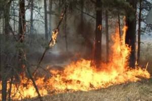 Россия оказалась в списке мировых лидеров по уничтожению лесов