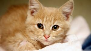 Рыжий котенок Синдбад пробыл в воде 17 дней без еды и воды