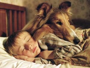 Ученые объяснили, почему собака лучший друг человека