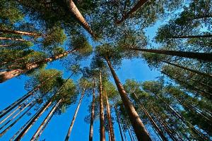 ОНФ обратились в генпрокуратуру РФ с просьбой спасти новгородские леса от вырубки