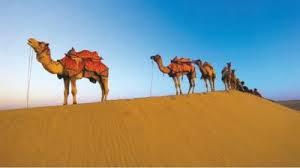 Ученые нашли вирус MERS среди молодых верблюдов