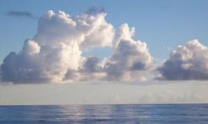 Половина белых облаков появилась в результате дыхания планктона