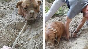 Француз спас заживо похороненного пса